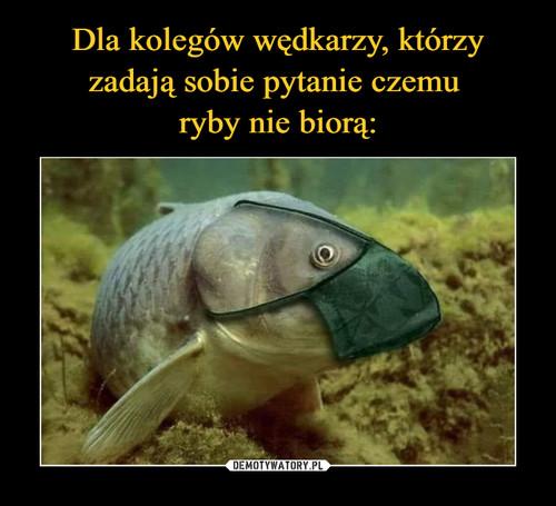 1589737433_ahzplp_500.jpg